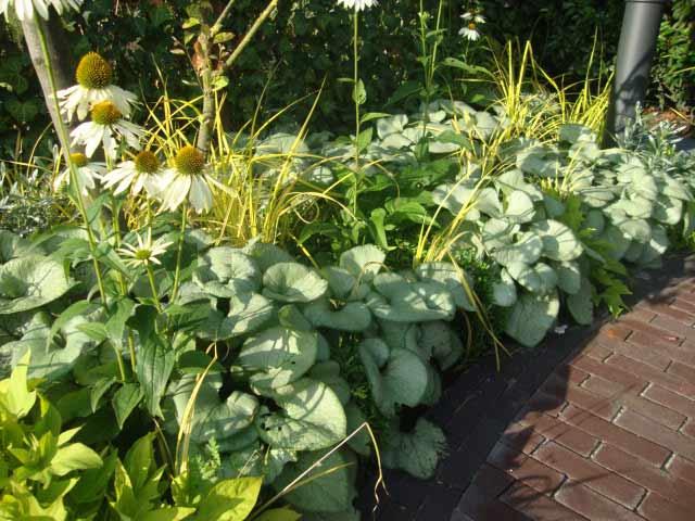 Een groene tuin art de jardin - Kleur voor levende ...